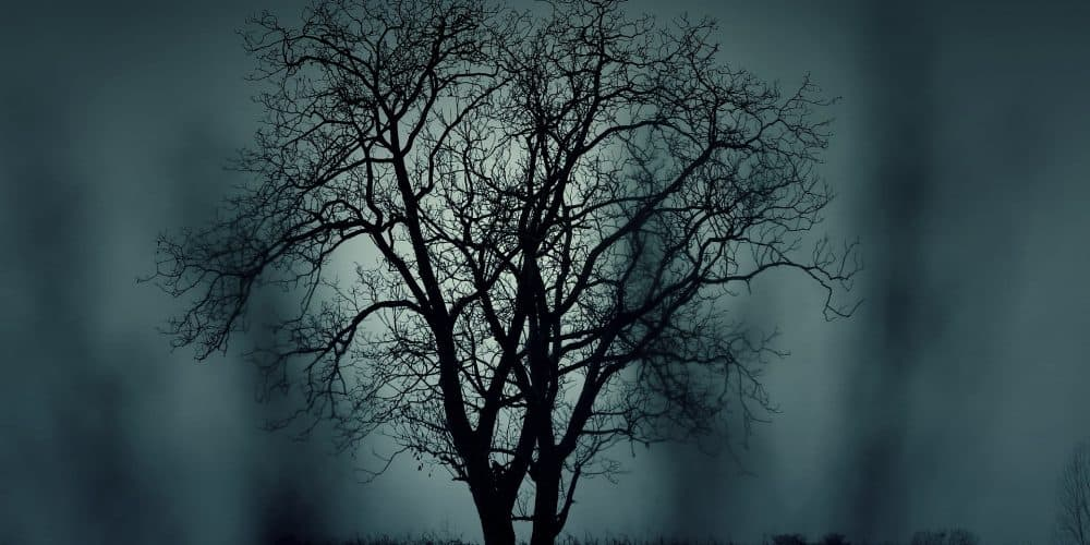 silhouette of tree in front of dark cloudy night sky